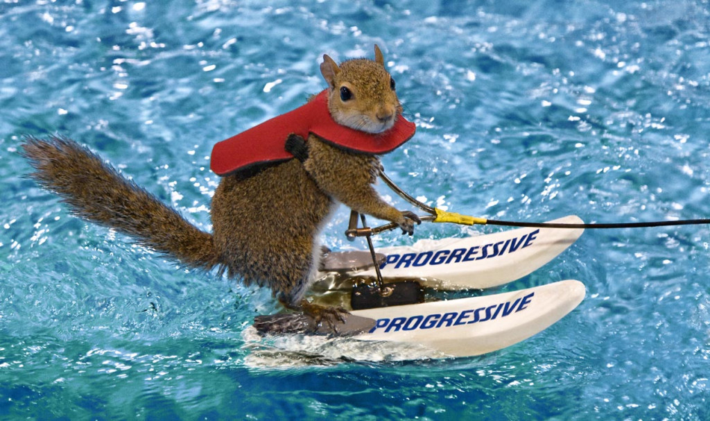 The Water Skiing Squirrel.